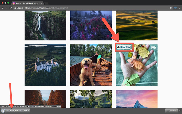 How to Download Instagram Photos/Images Fast